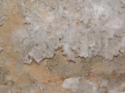 Schimmel Im Haus Finden weißer schimmel - wo sie ihn finden und warum er so verbreitet ist